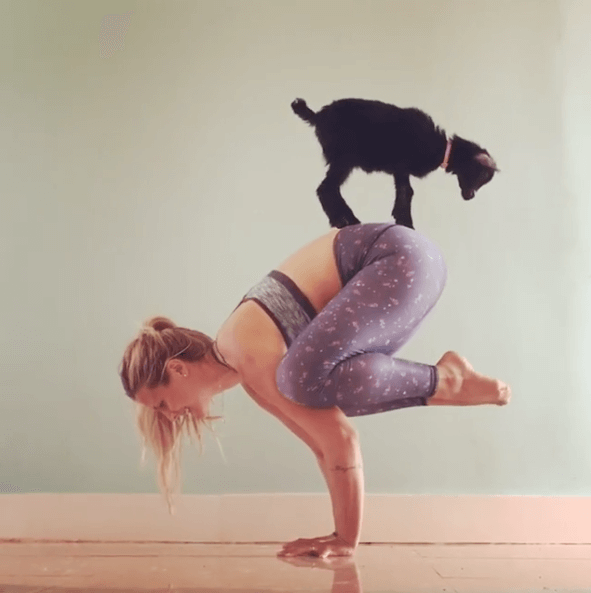 Yoga Girl Teams Up With Cute Baby Goat To Succeed