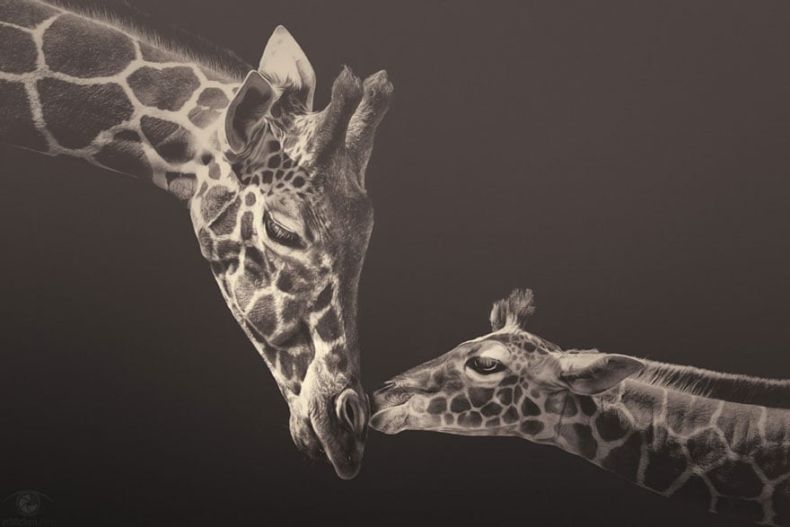 Soulful Photographs of Zoo Animals by Manuela Kulpa -zoo, animals