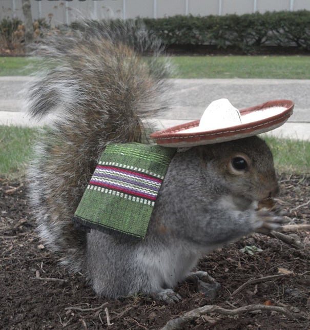 Student Befriends Squirrels And Dresses Them In Adorable Costumes -squirrels, cute