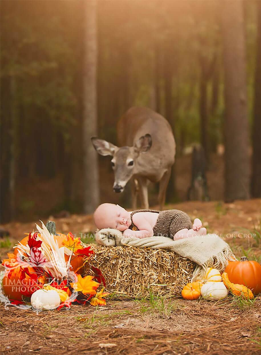 Deer Photobombs a Baby Photo Shoot and The Result Is Amazing -Video, baby