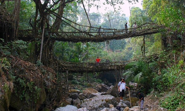 These Bridges In The World's Wettest Locale Aren't Built - They're Grown -trees, rain, India, forest, architecture