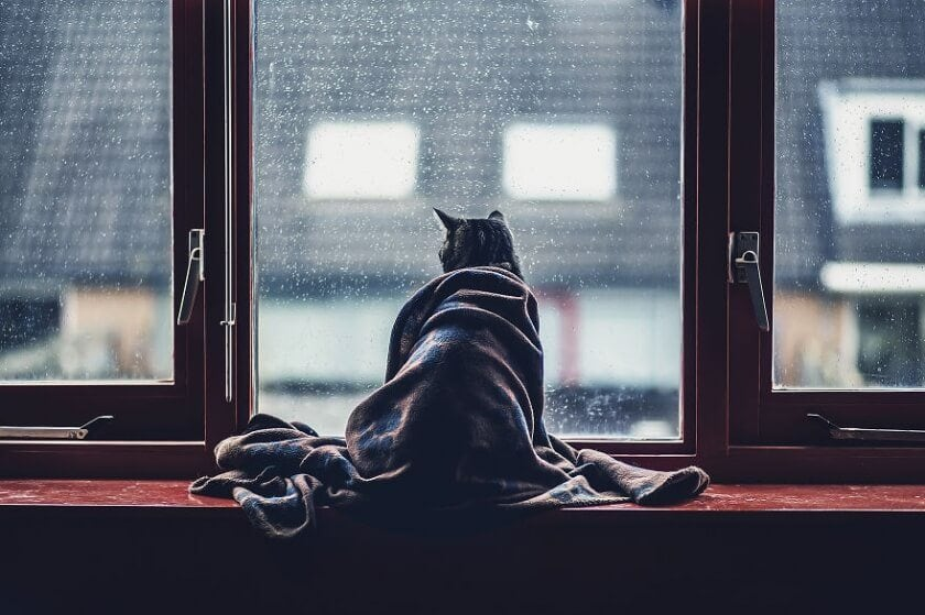 Graphic Designer Photographs Cats to Fight Her Insecurities -photographer, cats, black and white