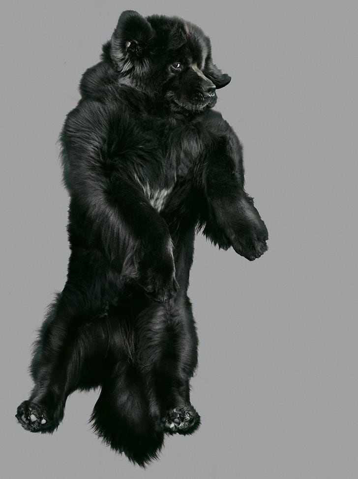Hilarious Portraits of Dogs Jumping in the Air -dogs, animals