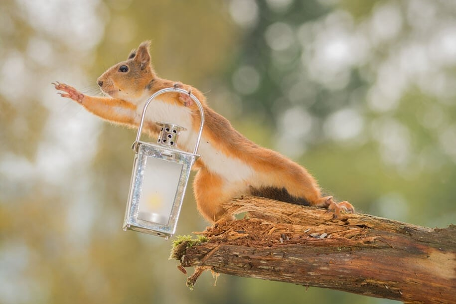 Geert Weggen Makes A Living Taking Photos Of Squirrels In His Garden -nature, funny
