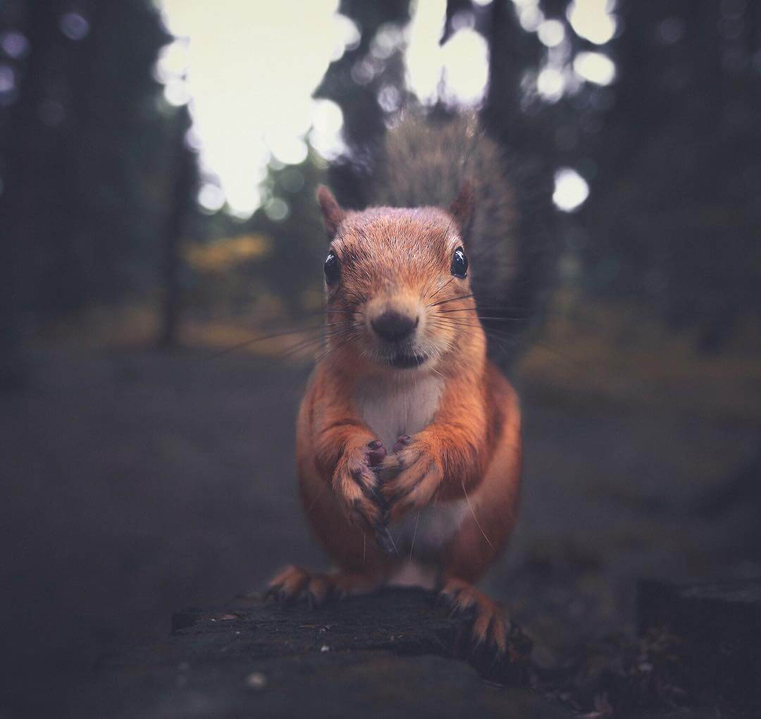 Honest Moments with Forest Animals by Konsta Punkka -nature, finland, animals
