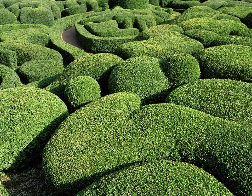 Abstract Views of the Marqueyssac Topiary Gardens -plants, gardening, france