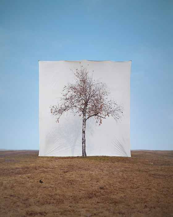 """Tree"" by Myoung Ho Lee -trees, photo-series"
