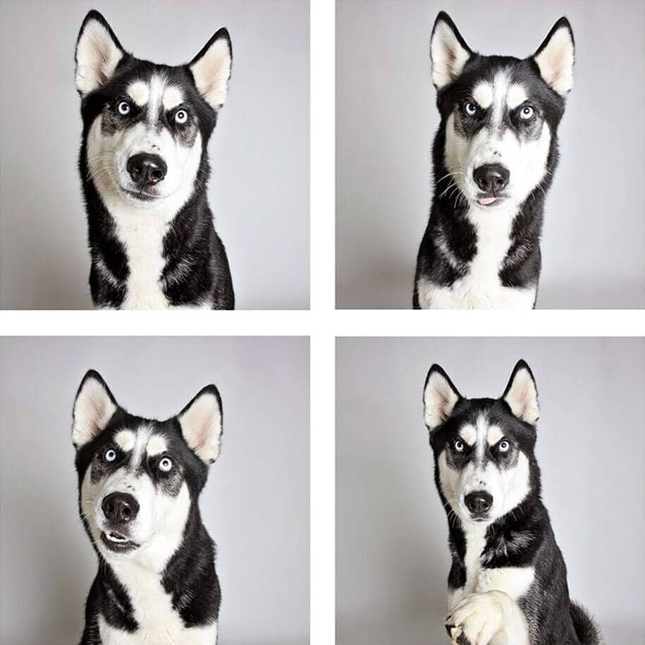 Photo Project That Helps Shelter Dogs Find New Place -dog, adoption