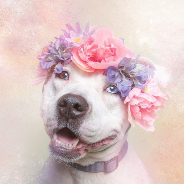 Flower Power: Portraits of Dogs with Garlands by Sophie Gamand -flowers, dogs