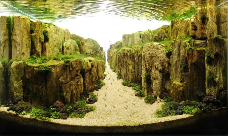 Aquascaping Is Underwater Art Unlike Anything You've Ever Seen -underwater photography, nature, landscapes, feat