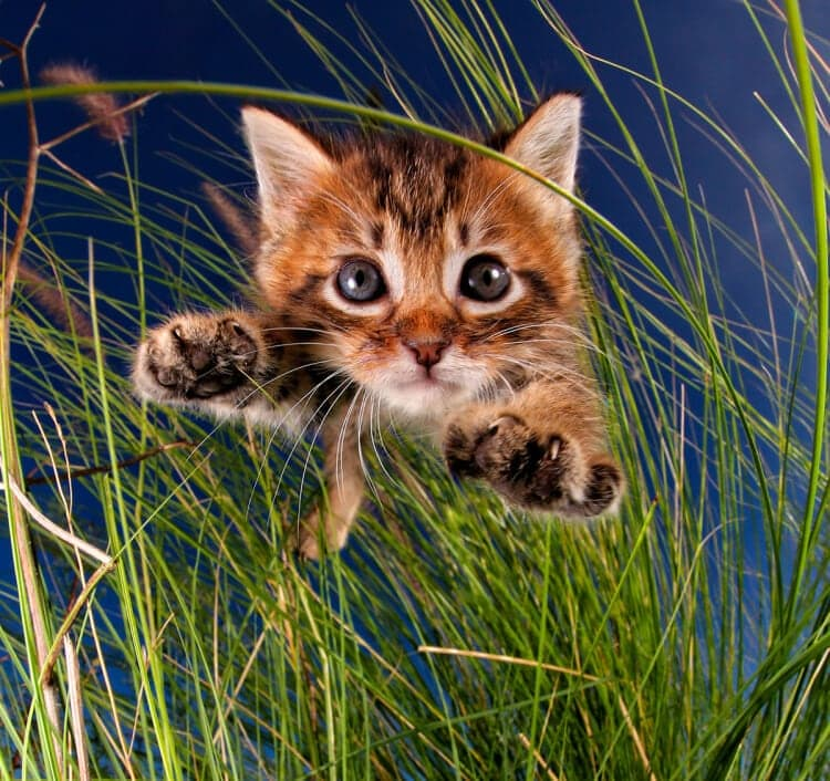 Seth Casteel Captured Cute Rescue Kittens in Mid-Pounce -Seth Casteel, photography, cats