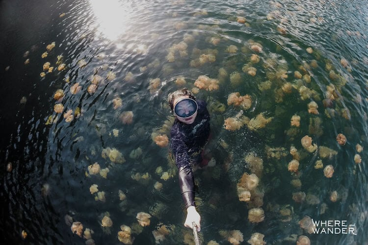 jellyfish-lake-kien-lam-7