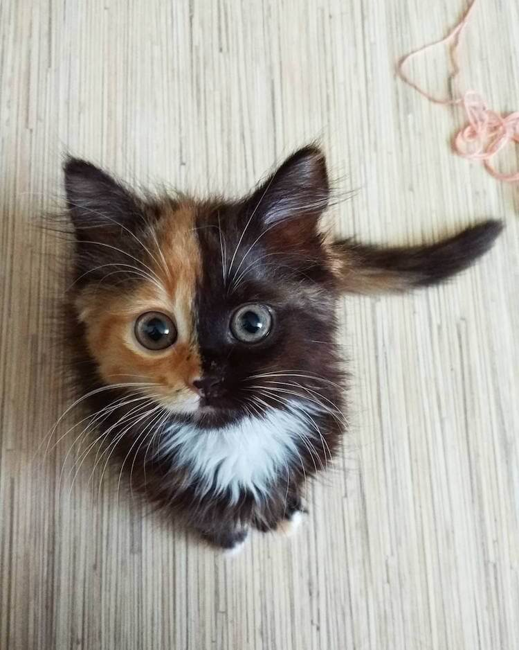 Meet Yana, The Two-Faced Kitty That is Captivating the World -