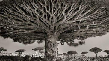 Photographer Spent 14 Years Capturing The World's Most Aged Trees -
