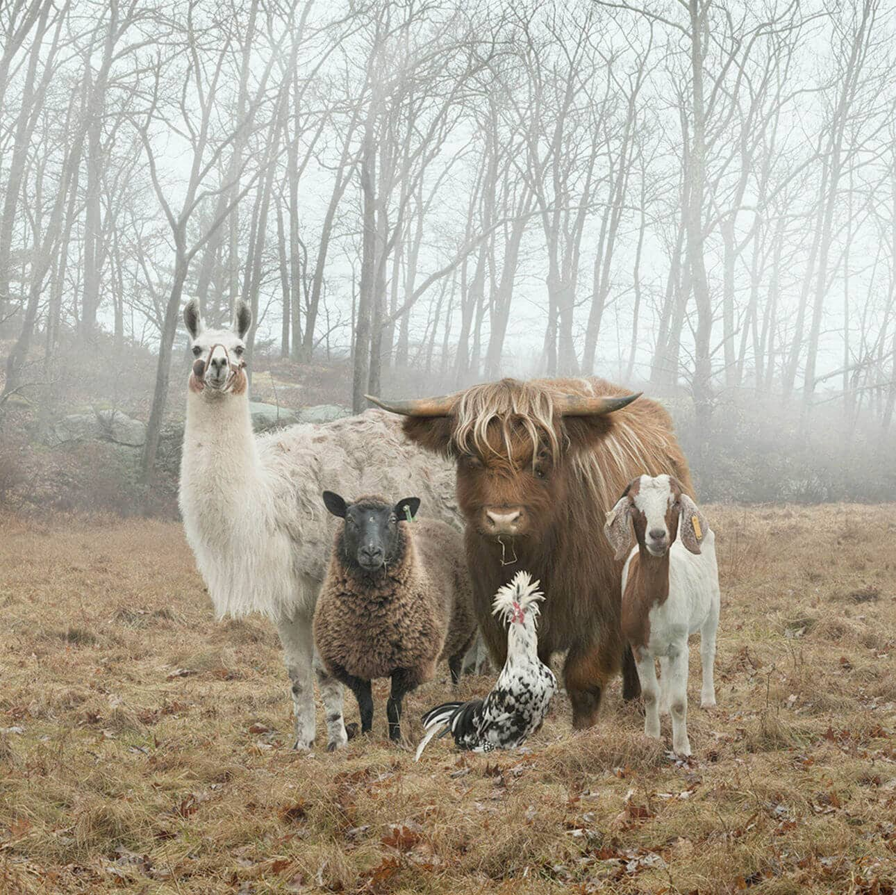 Rob MacInnis Takes Animal Farm Photographs Like You Haven't Seen Before -