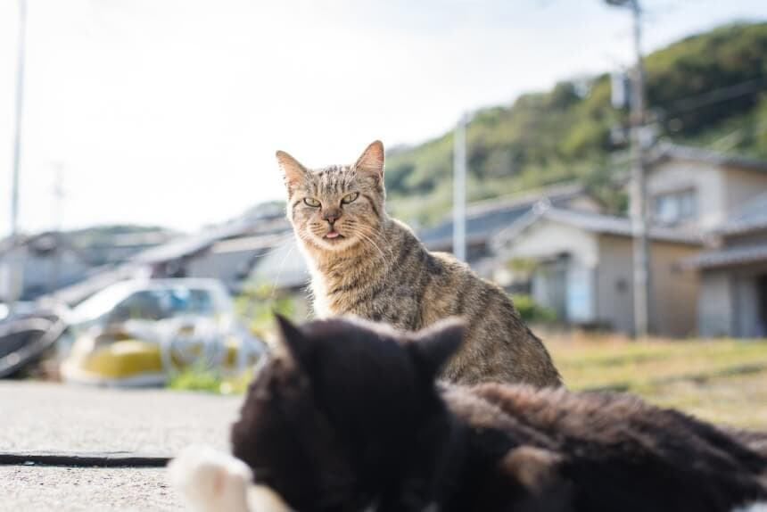 What To Anticipate When You Visit a Cat Island In Japan -