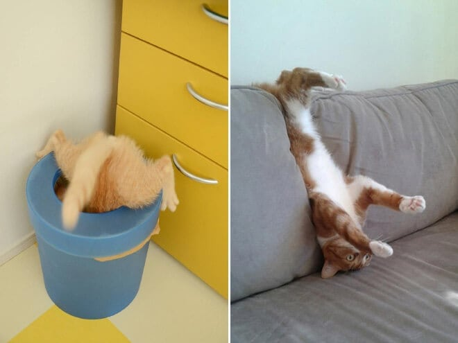 Cute Photos Of Pets Coping To Understand Furniture -