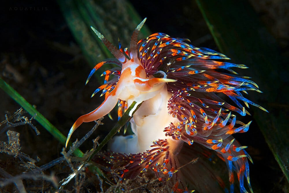 Alexander Semenov Photographs Extraordinary Creatures from the Depths of the World's Oceans -