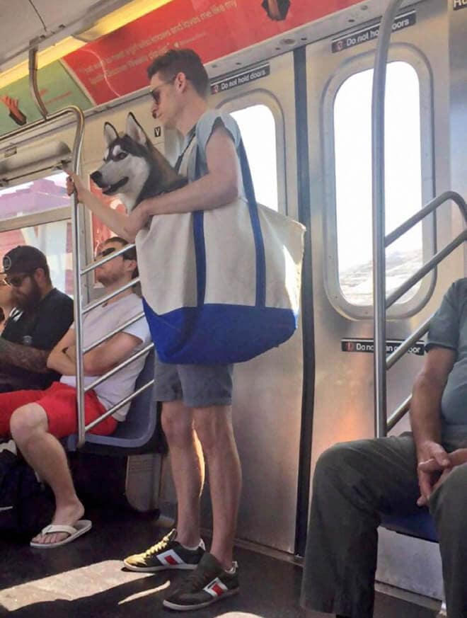 The NYC Subway Banns Dogs Unless They Fit In Bags and This Happened -