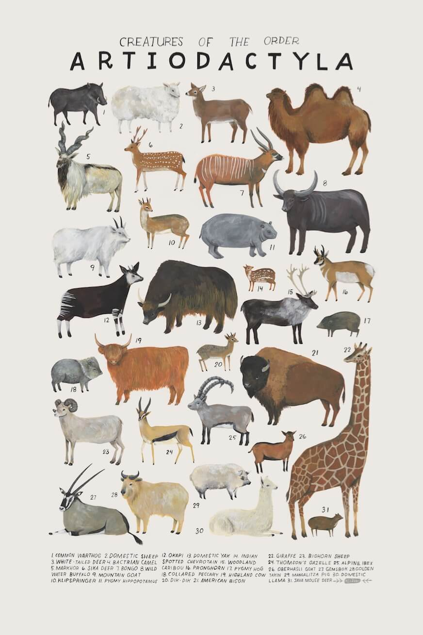 Whimsical Watercolors Illustrate the Many Classes of the Animal Kingdom -