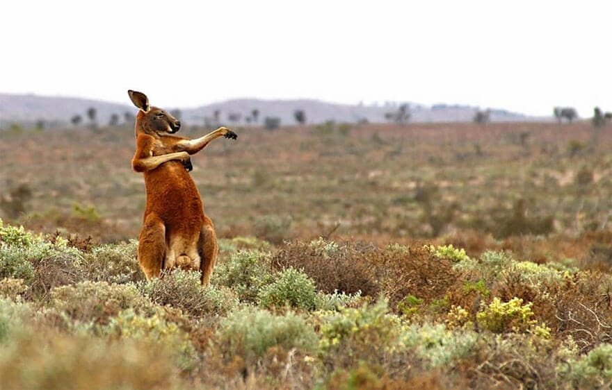Hilarious Entries To The 2017 Comedy Wildlife Photography Awards -