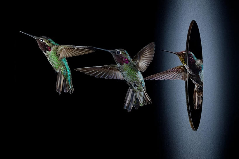 National Geographic shows a Unique Look at Hummingbirds' Lives -