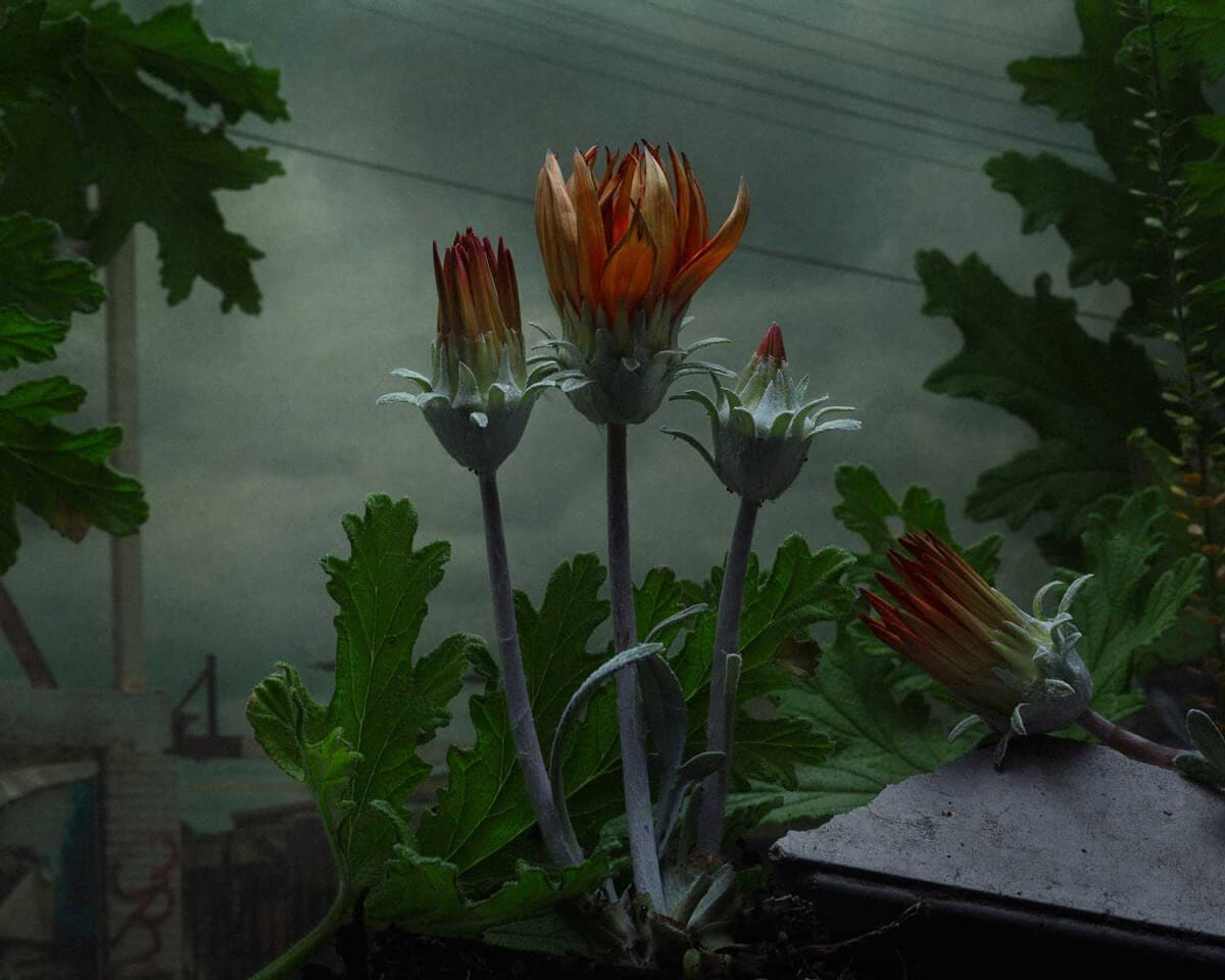 Daniel Shipp's Dramatic Flora and Fauna Photography World -urban, flowers, dioramas, botany
