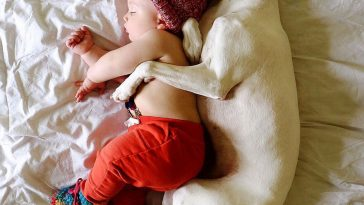This is Abused Dog is Afraid of Everyone But This Baby -dogs, dog