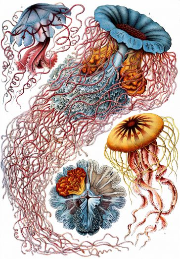 A Collection of Colorfully Illustrated 19th-Century Biological Fauna by Ernst Haeckel -science, microbes, gohome, books, biology
