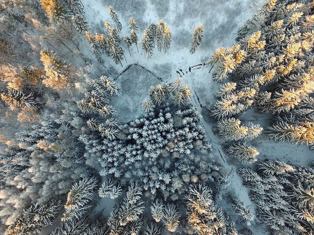 The Siena International Photo Awards 2017 has Announced Its Winners -nature, gohome, contest