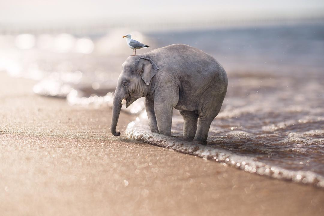 Giant Animals And Tiny Humans By Eben McCrimmon -photo manipulations, photo manipulation, animals
