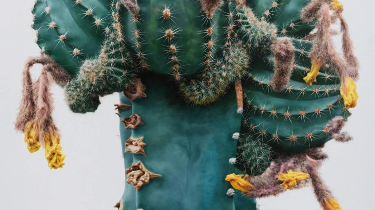 Lee Kwang-ho's Immersive Hyperrealistic Cactus Paintings -hyper-realistic, gohome, flowers, drawings, artist