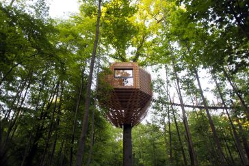 You Will Definitely Want To Live In This Unique TreeHouse Built Around 100-Year-Old Oak -treehouse, tree, gohome, forest