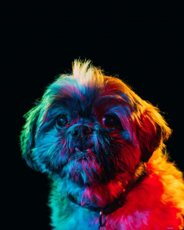 Vivid Portraits of Adoptable Dogs by Paul Octavious -portraits, photographer, gohome, dogs, dog