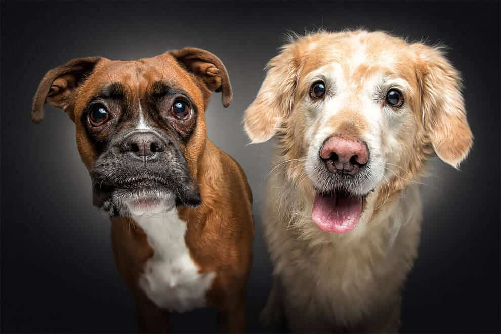 A Photographer Captured a Series of Dog's Reactions During Treat Time -photo session, gohome, dogs, dog